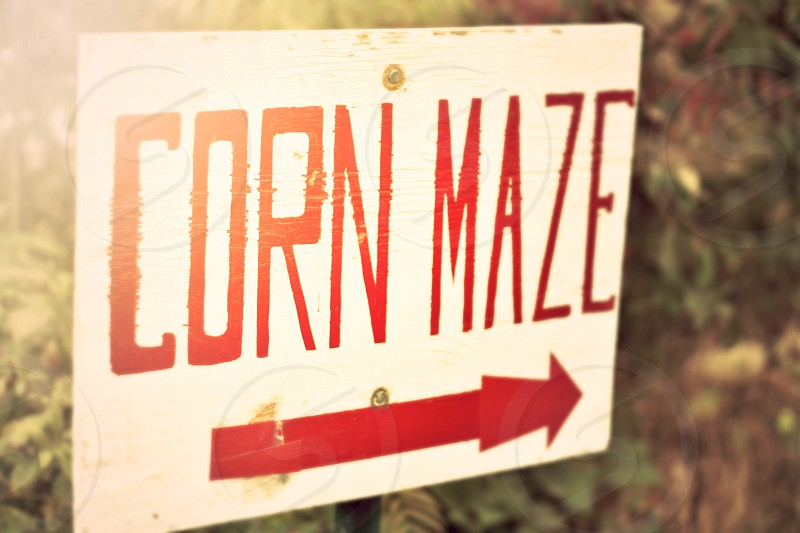 Fall summer corn maze farm sign in sunshine  photo