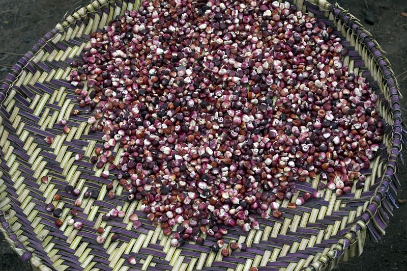 Colorful Hopi blue corn is extremely drought resistant and is grown around the Reservation Mesa's. photo