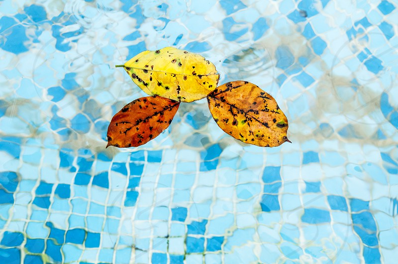 Leaves floating on water in swimming pool photo