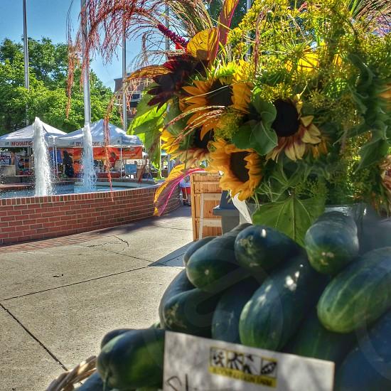 sunflower near cucumber photo