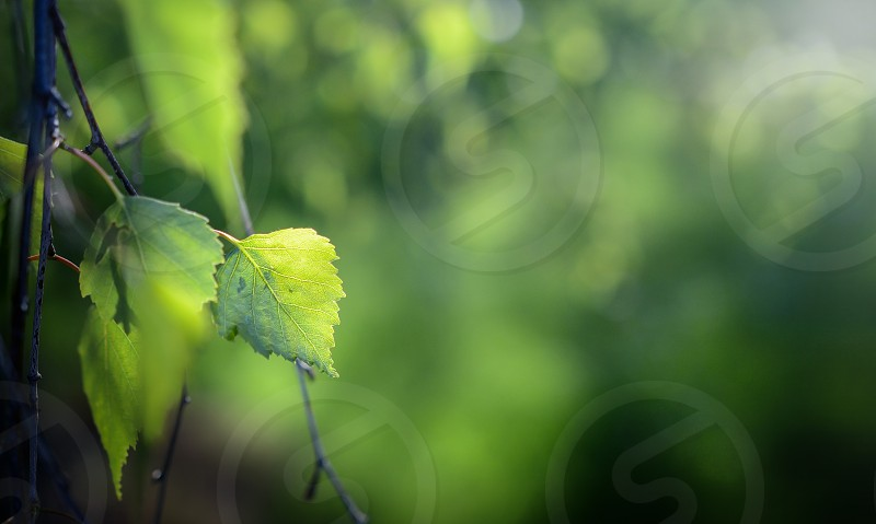 New Leaf photo