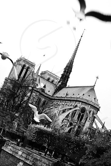 This seagull is perhaps experiencing wanderlust as much as the next traveler visiting the Notre Dame Cathedral Paris. photo