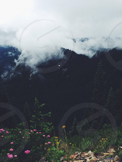 purple and yellow flower and green tree with fogy clouds photo