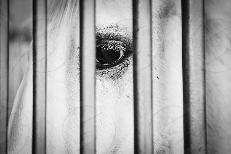 Horse eye closeup pet portrait white horse mammal pet behind bars beautiful photo