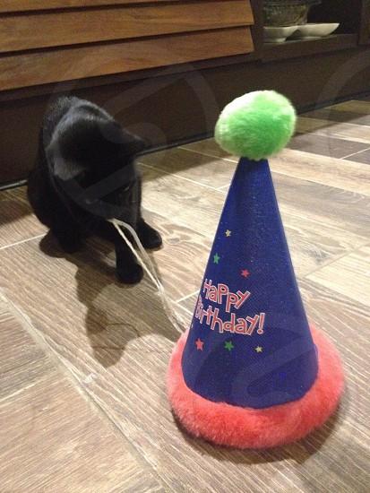 Happy Birthday! photo