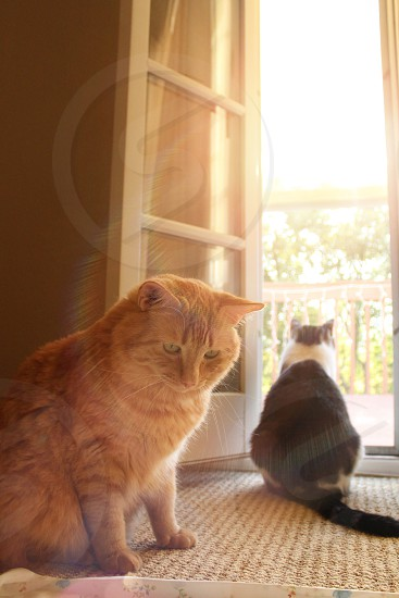 Sunset Cat photo