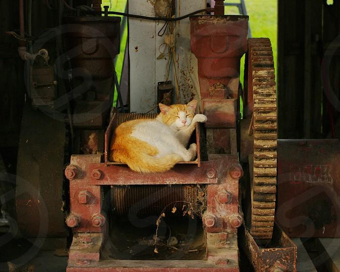 Stray cat sleeping on factory equipment in rural Louisiana photo