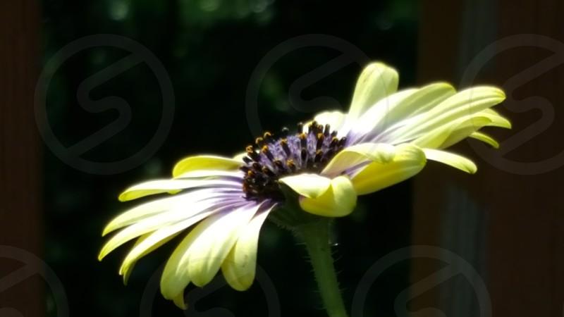 Sunkissed Flower photo