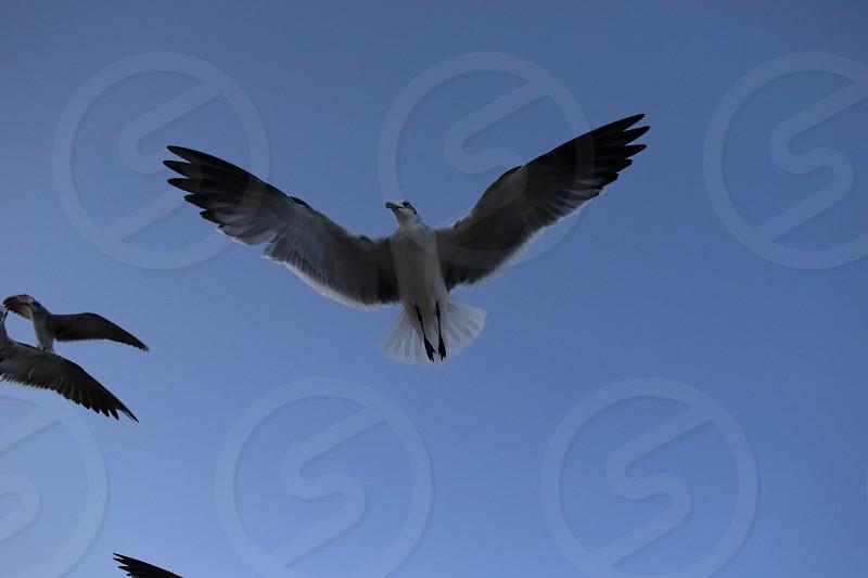 miami birds on coastline photo