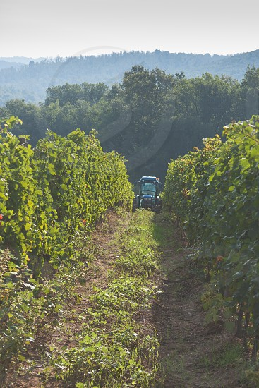 Vineyard tractor photo