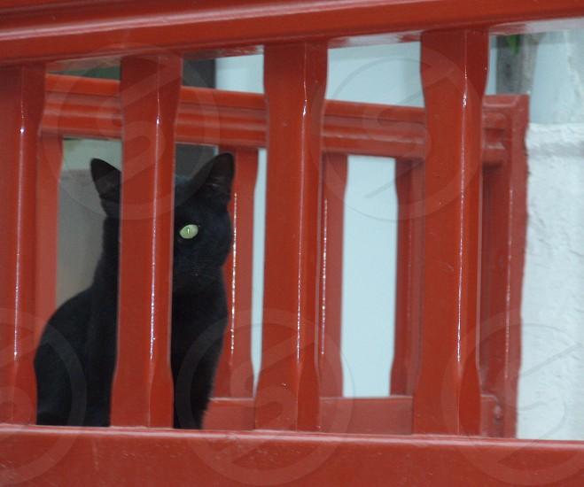 Black cat green eye red railing Mykonos Greece photo