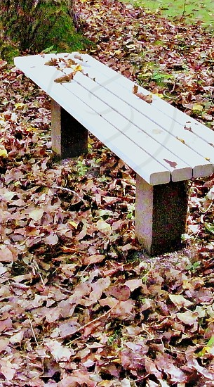 white wooden park bench surrounded by brown leaves photo