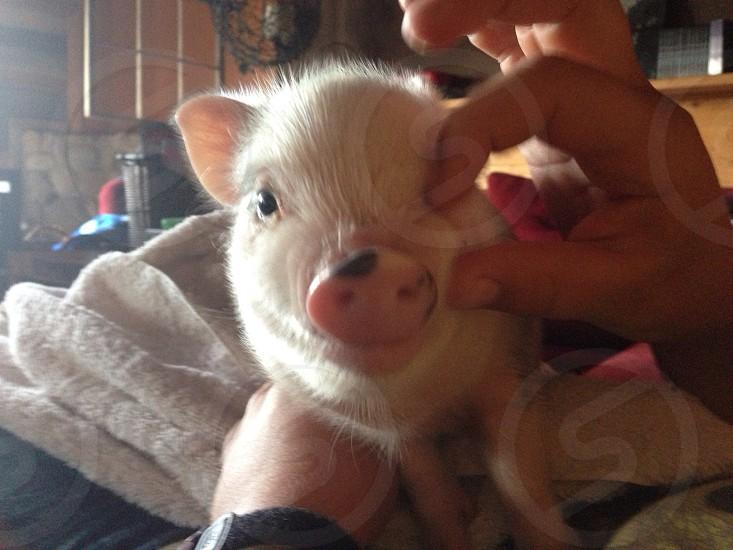 A pinch of pork photo