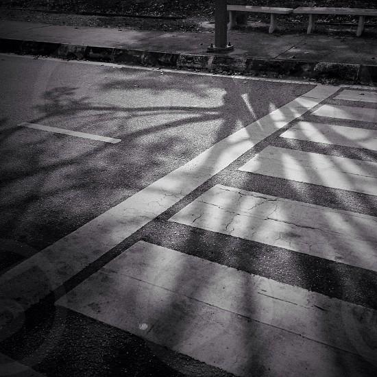 white pedestrian lane photo