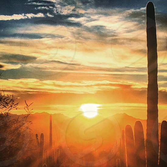 Supersunset with Cacti photo
