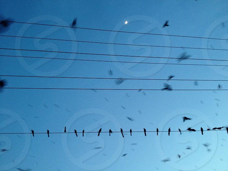 Birds! photo