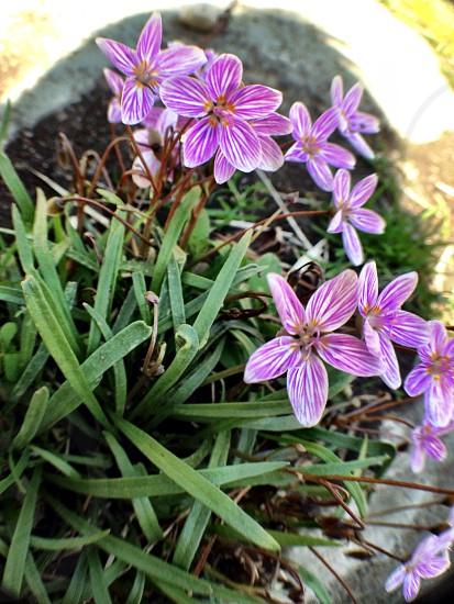 purple flower plant photo