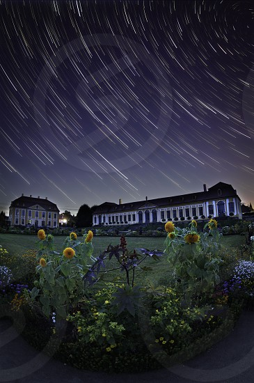 green plant with yellow flowers and mansion with meteor shower photo