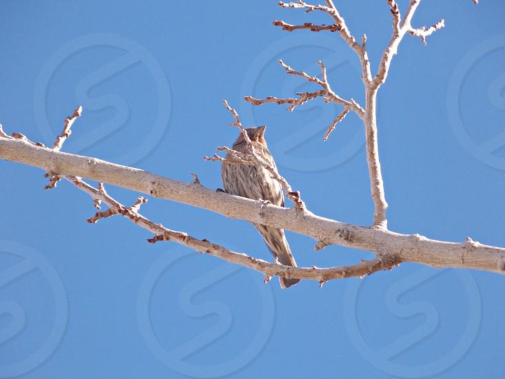 brown bird on tree photo