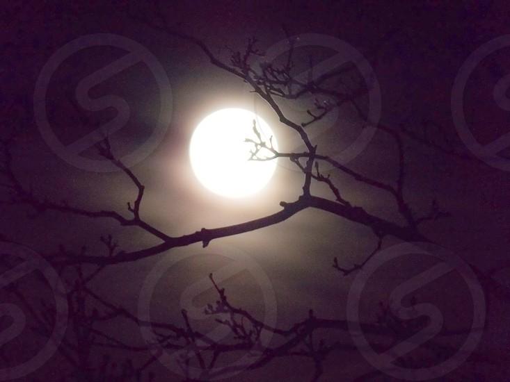 Full Moon Branches Night Sky Moon photo