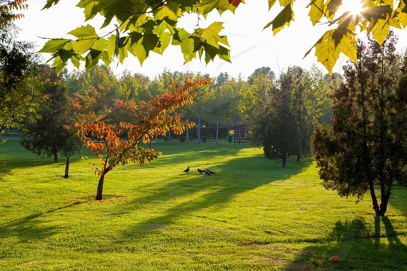 Autumncityparkbucharestromania photo