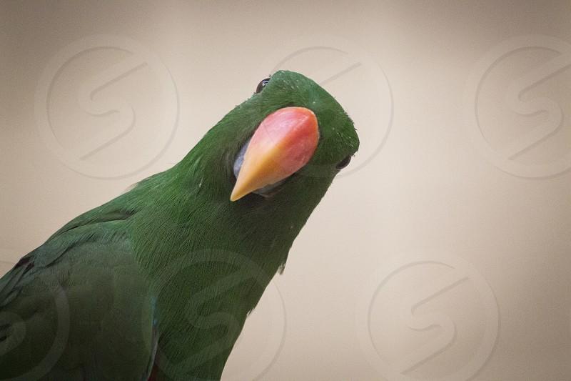 Cheeky bird came to say hello. photo
