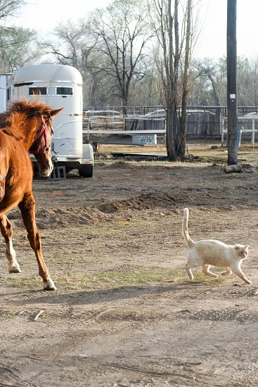 Thoroughbred horse cat play farm life work play love fun yearling photo