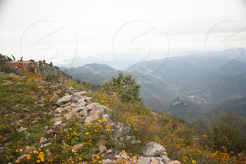 Idyllic mountain landscape with fog in the Sierra Gorda of Mexico between yellow flowers and lavender photo