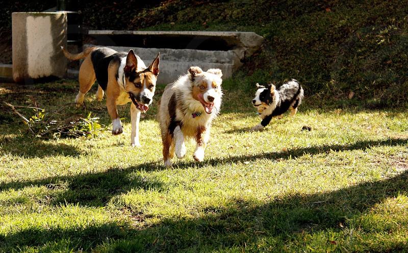 Park dog dogs photo