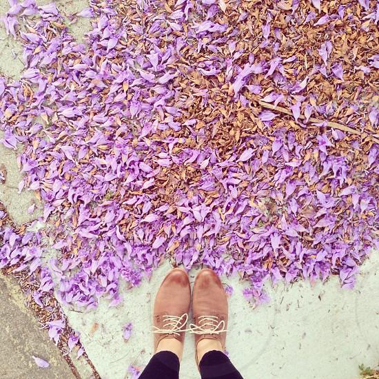 purple leaf plant photo
