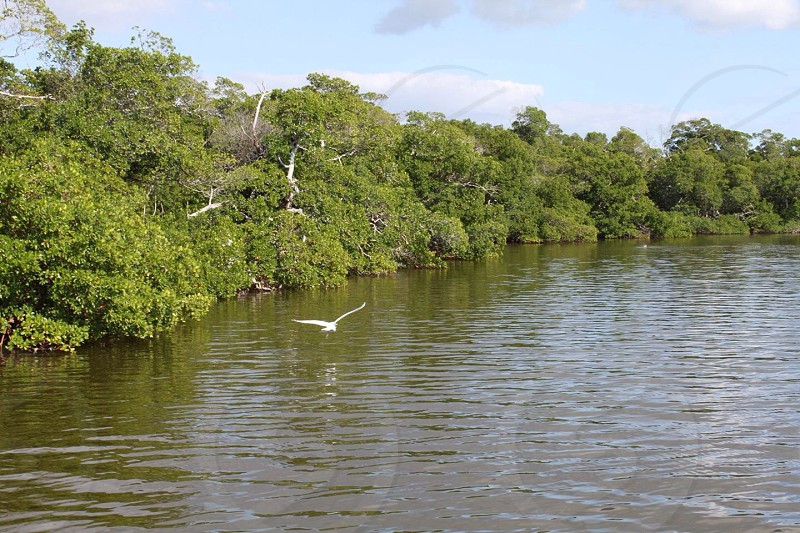 white flying bird above lake near green forest photo