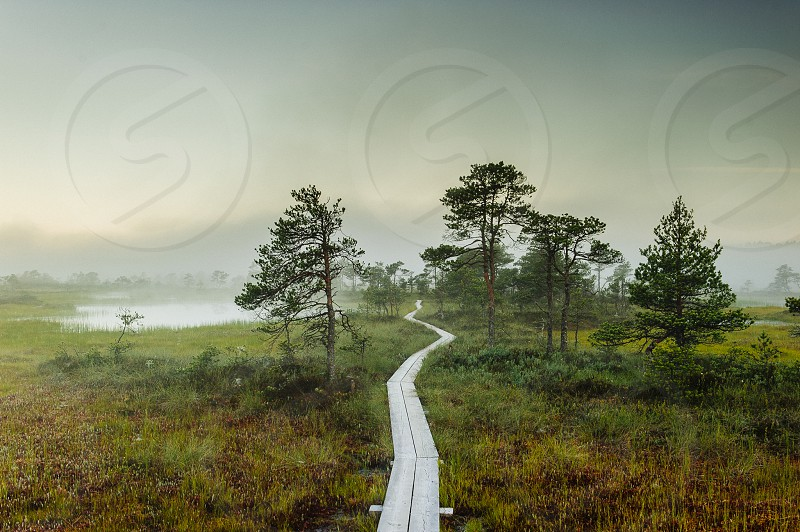 brown wooden pathway on forest photo