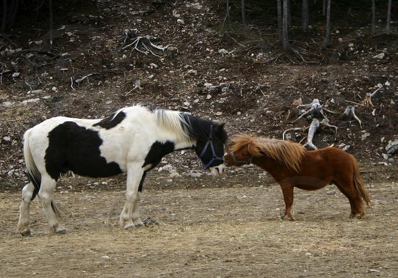 kissing horses photo
