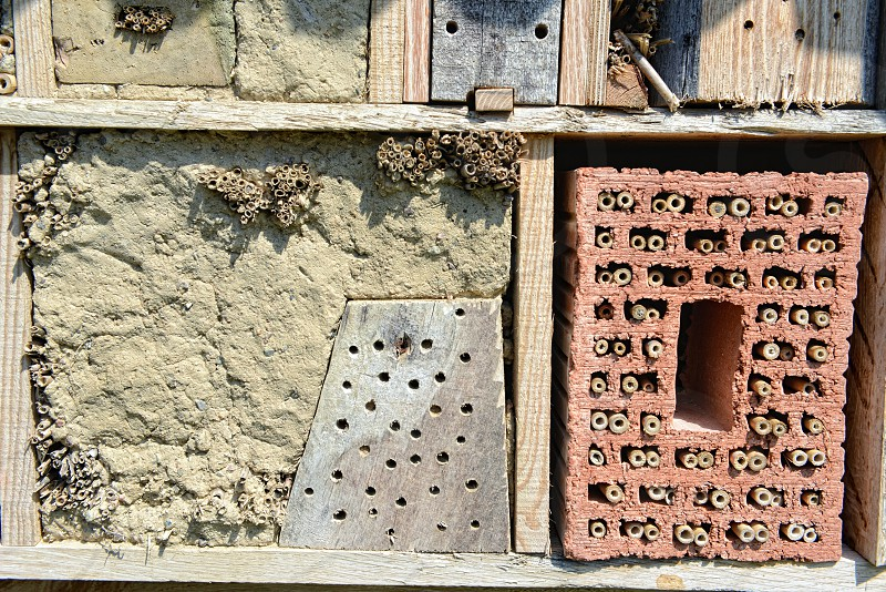 insect hotel with bamboo sticks and brick stone. for wild bees photo