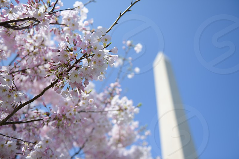 DC in the Spring photo