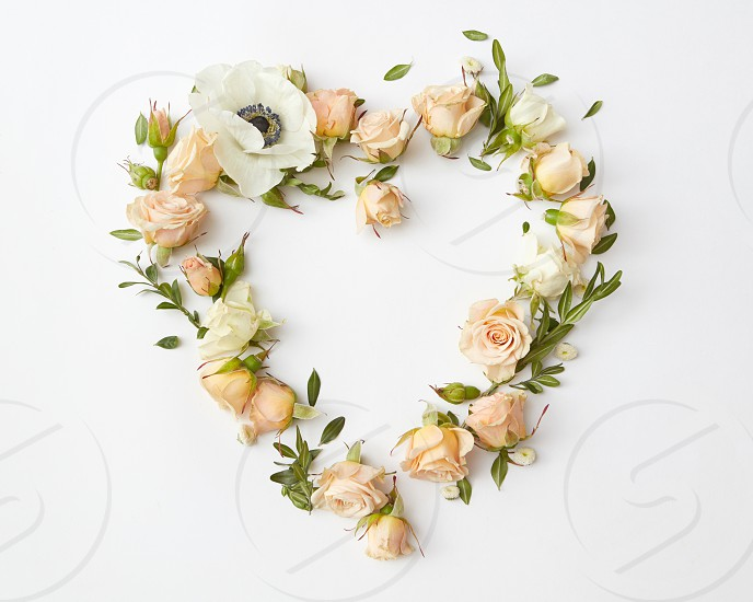 beige roses buds arranged as heart on white background flat lay photo