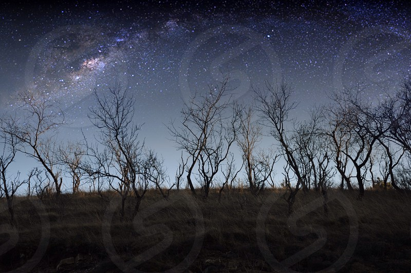 bare trees on brown grass field under starry sky during nighttime photo