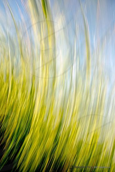 Streaked grass photo