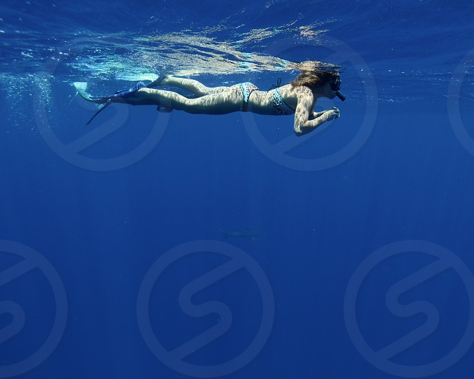 Snorkeling in deep blue ocean water with shark photo