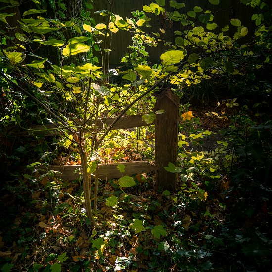 Dark but sunlit glade in Lindfield West Sussex photo