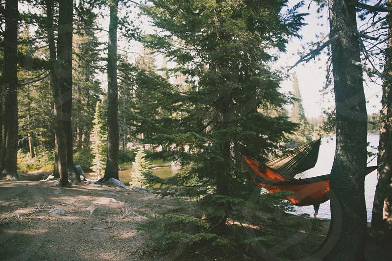 orange hammock tied on trees photo