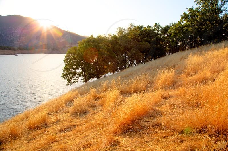 brown grass near a river  photo