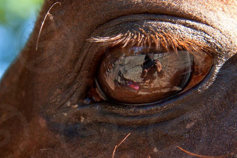 Eye of a brown horse and human reflection of the photographer in him close-up photo