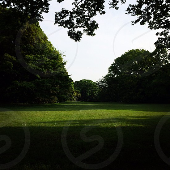 A park in Japan showing off its greenery.  photo
