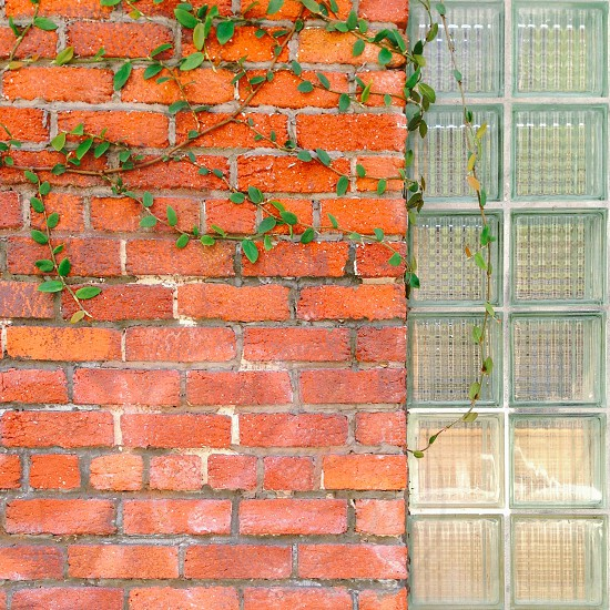 Brick wall with glass bricks and vines photo