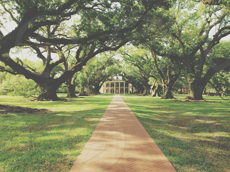 Oak Alley Plantation: Vacherie Louisiana photo