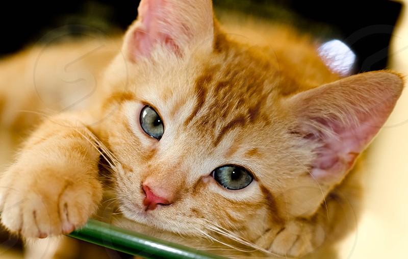 kitten waiting to play photo