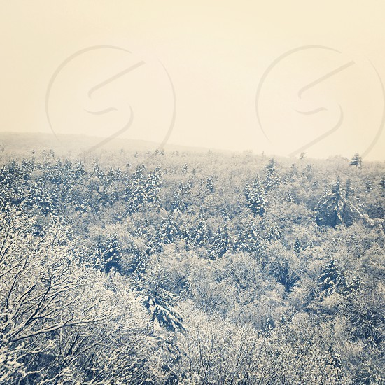 aerial view photography of snowy forest under cloudy sky during daytime photo