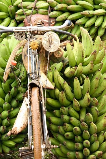 fruit bananas photo