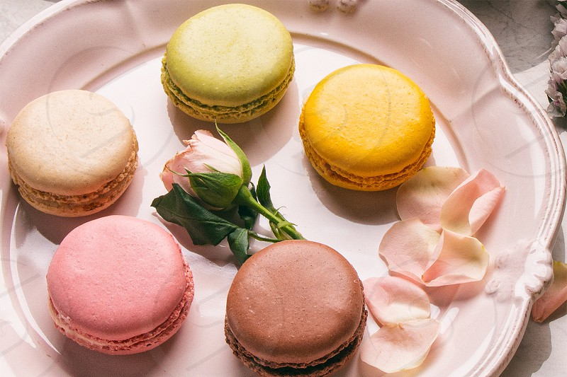 Macarons on a pink plate styled with rose petals. photo